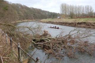 Fallen tree 2013